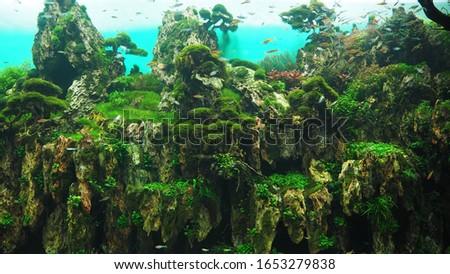 Undwerwater aquarium landscape: wildlife nature, tropical fishes habitat