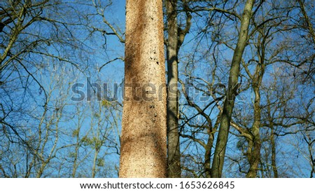 Bark beetle pest deciduous oak forests European infested drought dry attacked Xyleborus monographus ambrosia, Scolytus intricatus and Platypus cylindrus oak pinhole borer, larvae burrow