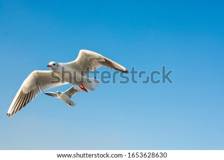 Seagull flying in sky. Seagull flying sky as freedom concept #1653628630