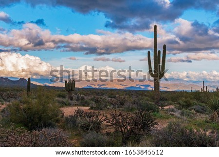Saguaro Cactus With Storm Clouds and mountains in an Arizona Desert preserve near Scoottsdale. #1653845512