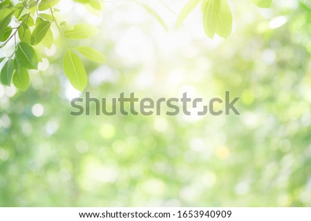 Beautiful nature view of green leaf on blurred greenery background in garden and sunlight with copy space using as background natural green plants landscape, ecology, fresh wallpaper concept. #1653940909