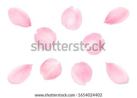 Japanese pink cherry blossom petals abstract on pure white background #1654024402