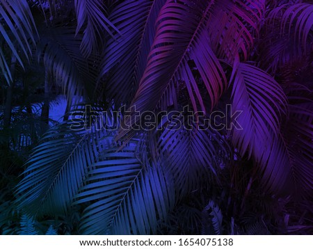 tropical leaf summer background with blue and purple party glow colors, exotic jungle palm tree leaves toned  Royalty-Free Stock Photo #1654075138