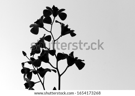 silhouette of a flower against a sky in black and white