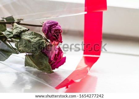 bouquet of dried scarlet roses in gift paper. They lie on the windowsill near the window. #1654277242