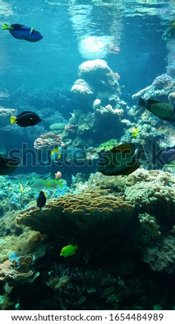 Sea tropical fish ocean water #1654484989