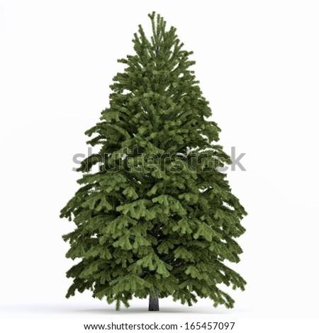 Fir tree isolated #165457097