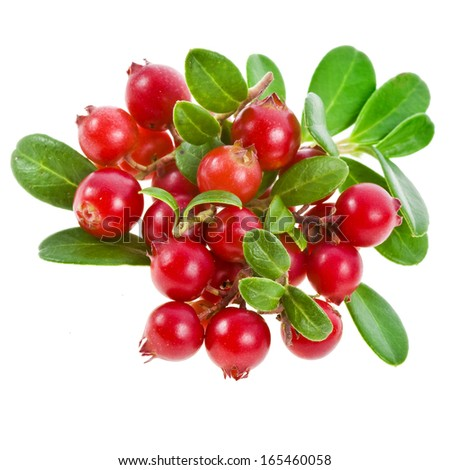 Cowberry Lingonberry (Vaccinium vitis-idaea) isolated on white background  #165460058