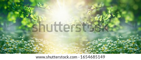 Beautiful nature in spring, young spring leaves and chamomile  Royalty-Free Stock Photo #1654685149
