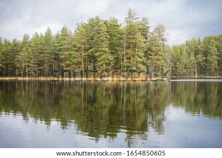Reflections of parallel tree trunks in clean bog lake water.  Green foliage of evergreen conifer trees. Winter day in countryside in Estonia, Northern Europe. #1654850605