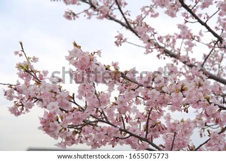Beautiful plum blossom Plum blossom festival #1655075773