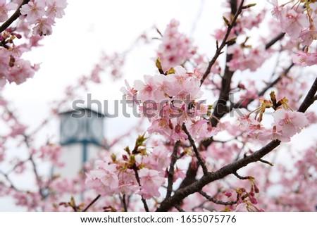 Beautiful plum blossom Plum blossom festival #1655075776