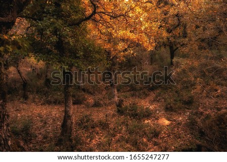 Ficuzza Forest near Palermo, Sicily in Italy, Europe on a cloudy autumn day #1655247277