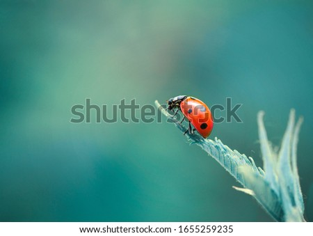 Cool macro nature picture of ladybugs on fern leaf. Blue background with place for text