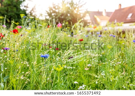 Urban gardening with a wildflower meadow in the own garden, insect and wildlife animal protection Royalty-Free Stock Photo #1655371492
