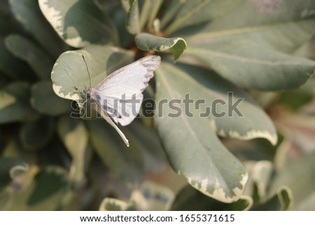 White creamy butterfly on leaves #1655371615
