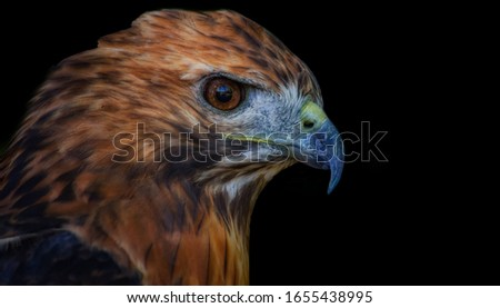Beautiful Eagle Face On The Black Background