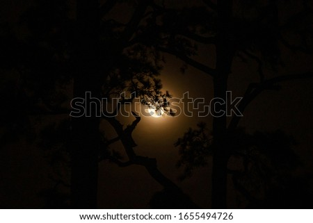 The tree at night with the moon background. #1655494726