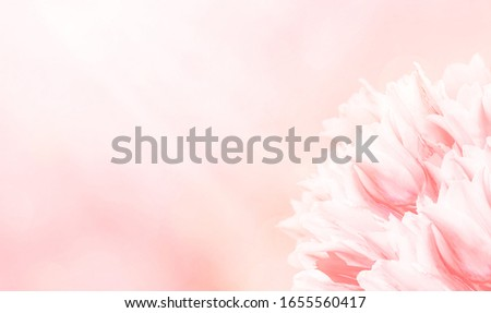 Spring flowers, pink background. #1655560417