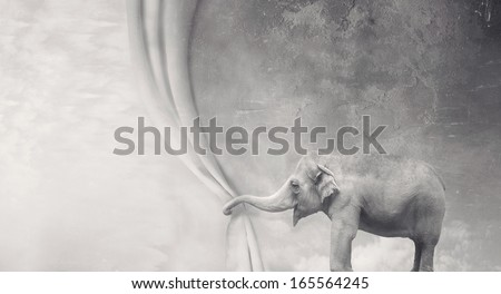 Beautiful surreal elephant that opens a curtain with its trunk in black and white