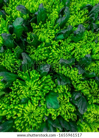Closeup of bright green flowers background for wedding concept. Mobile vertical photo #1655961517