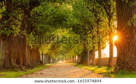 The Sun is shining through tunnel-like Avenue of Linden Trees, Tree Lined Footpath through Park at Sunrise Royalty-Free Stock Photo #1655974894