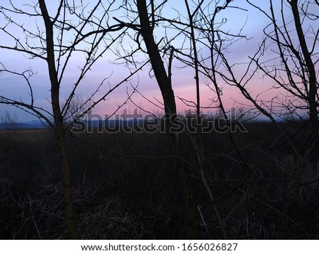 Picture in the woods at twilight.