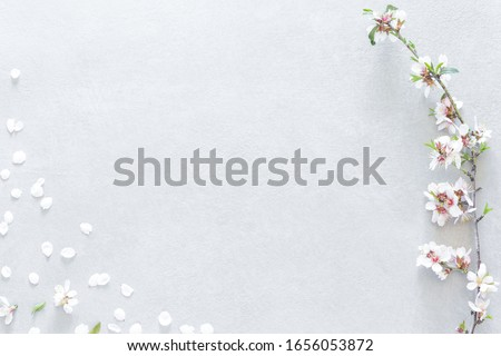 Stem with almond tree flowers on the right side and randomly dispersed white petals covering the lower left corner on a gray background with empty space for editing