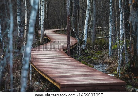 "Aerial view of wooden walkway on the territory of Sestroretsk swamp, ecological trail path - route walkways laid in the swamp, reserve ""Sestroretsk swamp"", Kurortny District, Saint-Petersburg, Russia"