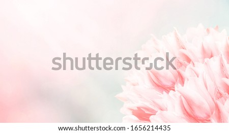 Spring flowers, pink background. Blossom tulips on blue and pink background. Sunbeams and bokeh over a blur banner, header or billboard. Valentine, love, Mothers day, wedding, summer and springtime. #1656214435