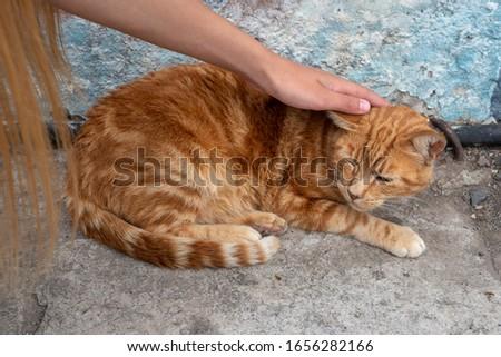 hand stroking red stray cat on city street corner #1656282166