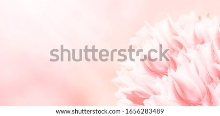 Spring flowers, pink background. Blossom tulips on blue and pink background. Sunbeams and bokeh over a blur banner, header or billboard. Valentine, love, Mothers day, wedding, summer and springtime. #1656283489