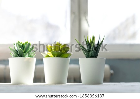 Different Succulents in small white pots on the table. home decor, nordic style design #1656356137