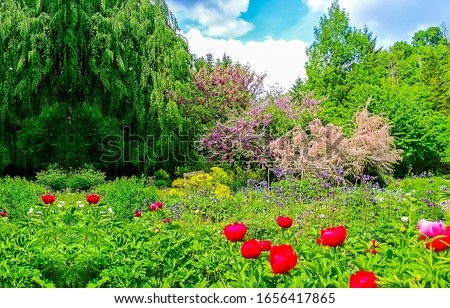 Summer green garden flowers view. Summer garden scene. Summer green garden. Red flowers in summer garden #1656417865