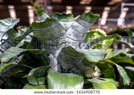 Back light leaves in park #1656908770