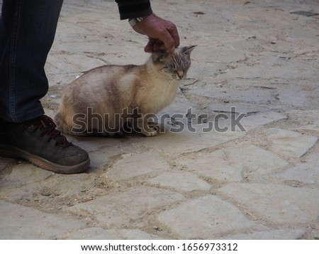a hand stroking the head of a cute brown and gray stray cat in huesca, spain, europe #1656973312