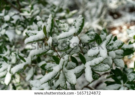 Green leaves under snow in forest #1657124872