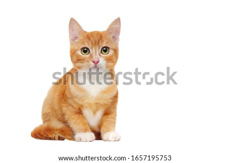 Close-up picture of a ginger kitten