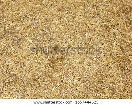 Beautiful dry rice straw on the floor #1657444525