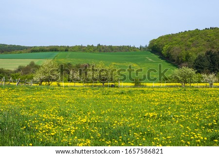 A meadow in the Taunus / Germany in spring with blooming dandelions #1657586821