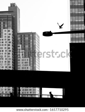 Military man in the shadow crossing the bridge.Pigeon flies from a street lamp,black and white photo #1657710295