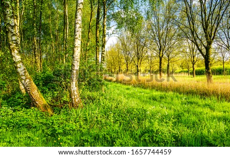 Forest meadow grass scene. Meadow woods forest view #1657744459