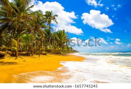 Tropical sand beach waves view. Sandy beach palm trees landscape. Palm beach sea waves view #1657745245
