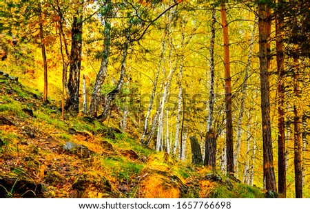 Autumn forest trees scene. Forest in autumn. Autumn forest summit trees #1657766698