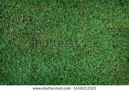 The texture of green grass for the background #1658212501
