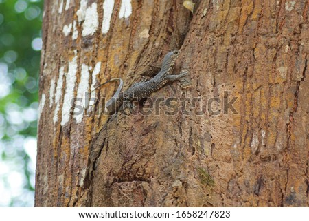 This photo is juvinile of Water moniter (Varanus salvator),It's a reptile in South Asia and Southeast Asia,It cans swim and climb trees ,it's able  adapt to various environments as well. #1658247823