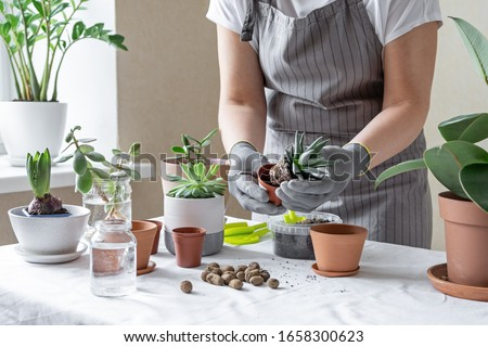 Woman hand transplanting succulent in ceramic pot on the table. Concept of indoor garden home - Image #1658300623