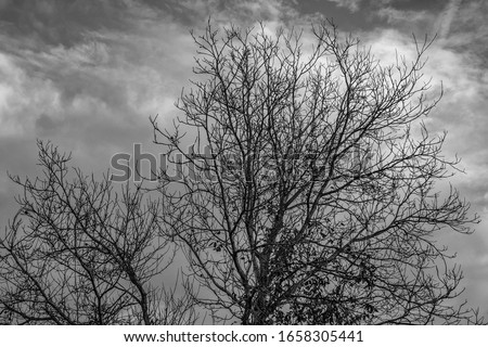 Bare tree canopy, black & white. Tree canopy with dramatic clouds in the background. The picture gives off a feeling of cold and sadness. #1658305441