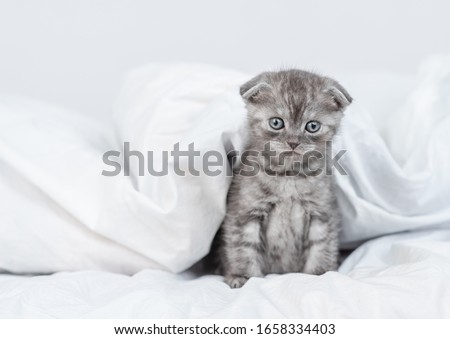 Cute kitten sits under warm blanket on the bed. Empty space for text #1658334403
