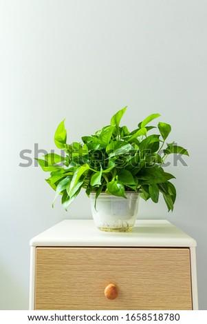 Green Radish Bonsai on the tea table #1658518780